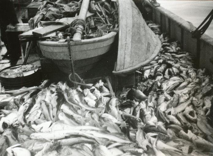 Mangan var nógvur fiskur á degginum.